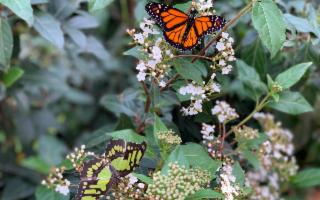 Nel Giardino Incantato delle Farfalle