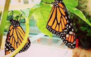 La Casa delle Farfalle - Un paradiso tropicale urbano