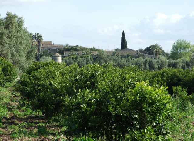 Agrumeto del Giardino di San Giuliano a Villasmundo
