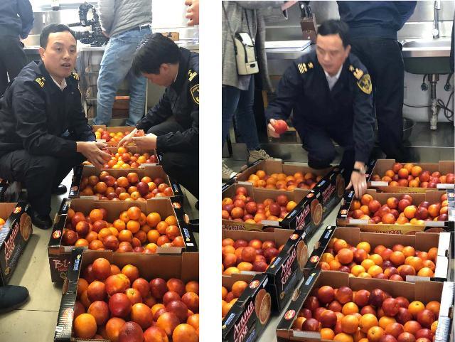 L'arrivo delle arance rosse Oranfrizer in Cina