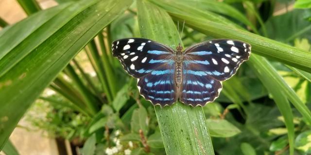 Ieri, alla Casa delle Farfalle di Palermo, è nata Gaia…