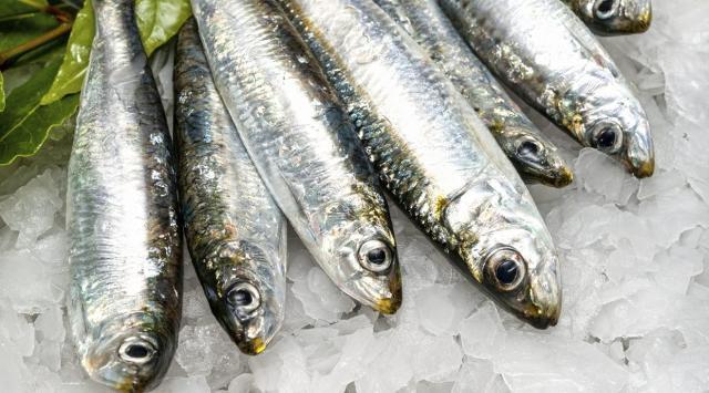 Sarde fresche, pesce azzurro povero ma buonissimo