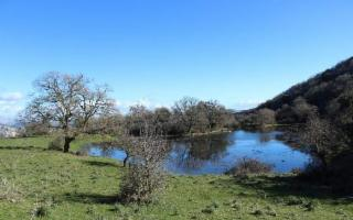 Natura nell'entroterra siculo: Bosco di Granza e Lago Bomes