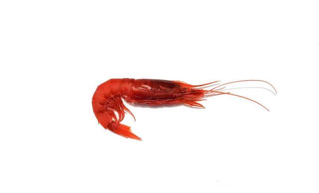 Il Gambero Rosso di Mazara è diventato nettare…