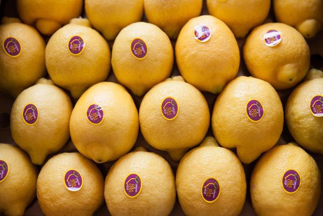 Limoni di Siracusa IGP