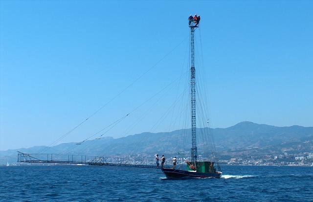 Feluca, imbarcazione adatta alla pesca del tonno rosso, vero e proprio patrimonio della pesca mediterranea