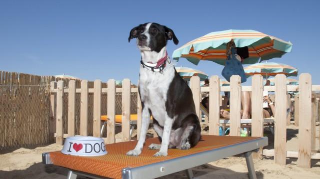 In Italia sono circa 18.000 le diverse normative locali relative all'accesso dei cani in spiaggia in questa estate 2019...