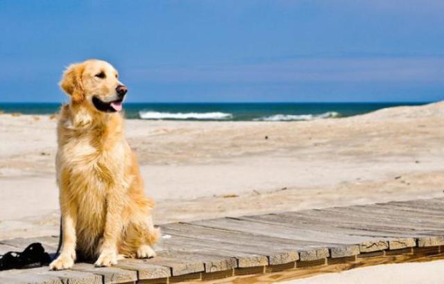Solo le Forze dell'ordine - ed in particolare la Capitaneria di Porto e i Vigili Urbani - possono rivolgersi al proprietario di un cane invitandolo ad allontanarsi, ma non prima di avere informato della presenza dell'ordinanza di divieto...
