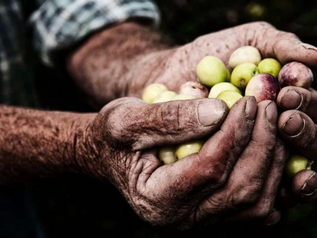 """""""L'intuito e la passione per l'avventura mi hanno subito spinto a scommettere sull'olio siciliano - dice Elisa Ambanelli - Il motivo? Semplice. Prezioso ma non pregiato, l'olio in Sicilia è il prodotto di tutti. Dal passato fino ad adesso, è sempre entrato a far parte delle famiglie siciliane senza distinzione""""."""