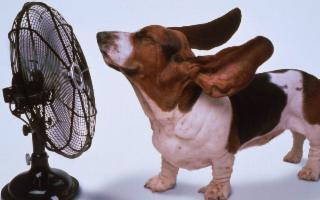 Cinque consigli per non far diventare il nostro cane un… hot dog!