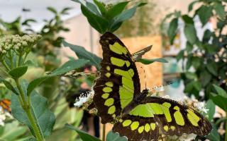 Le farfalle tornano nella loro casa palermitana