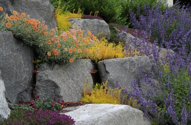 """Un esempio di """"giardino asciutto"""""""