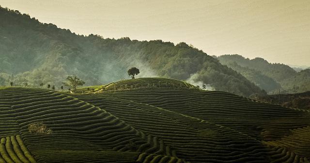 I giardini del tè di Dazhangshan - FBSR