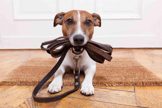 Per una vacanza senza stress, sia per il pet sia per i vicini di casa o di stanza, è bene seguire delle piccole regole di educazione civica...