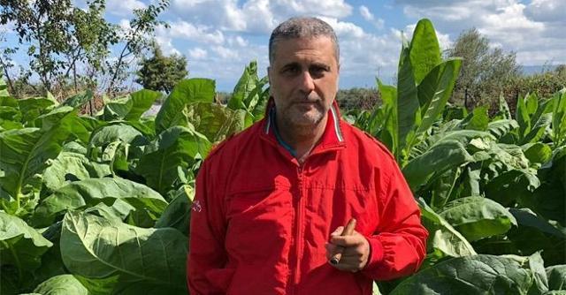 Federico Marino in mezzo ad una sua piantagione di tabacco