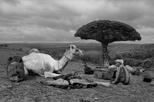 Socotra in una foto di Jordi Esteva