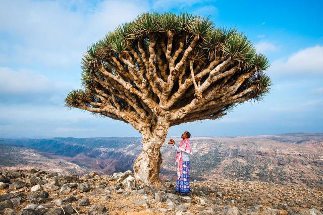 Socotra - ph del National Geographic