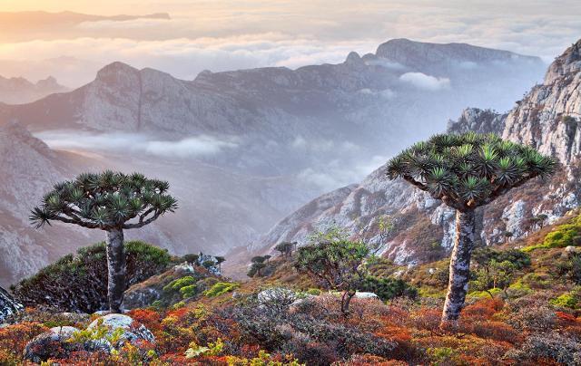Palermo scelta per far conoscere le bellezze - in pericolo - di Socotra