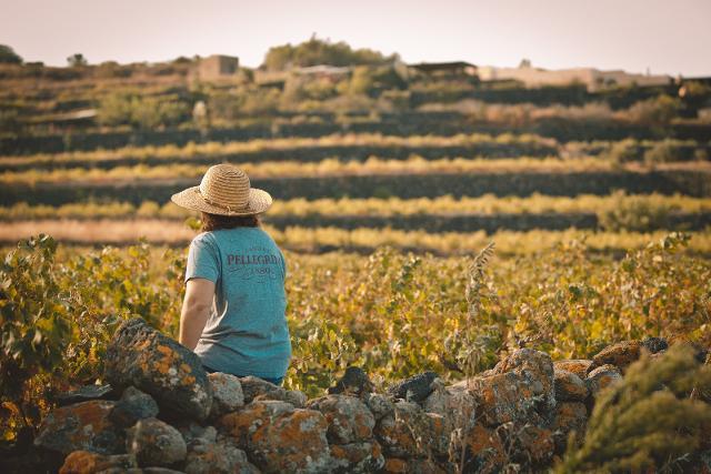 Vigneti a Pantelleria - Cantine Pellegrino