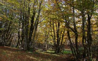 Poesia d'autunno sotto i faggi delle Madonie, di Giuseppe Ippolito