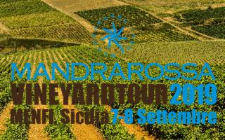 Mandrarossa Vineyard Tour 2019