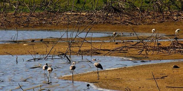 Cicogne in riva al lago