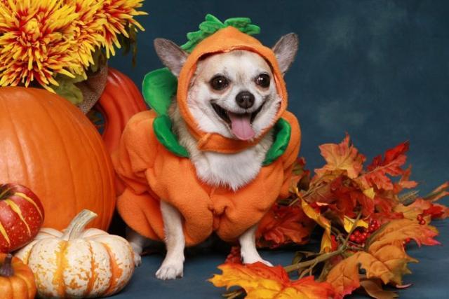 E Halloween sia anche per i nostri amici a quattro zampe!