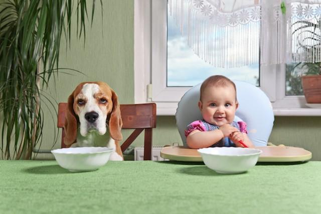 Animali domestici come figli: la Pet Economy sempre più vicina al Baby Care