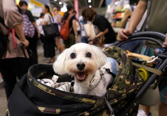 """Stiamo assistendo e vivendo ad un nuovo rapporto tra uomo pet: il cane e il gatto sono sempre più """"cittadini"""", fanno ormai parte a pieno diritto delle famiglie italiane e ne condizionano i comportamenti, ne guidano i consumi."""