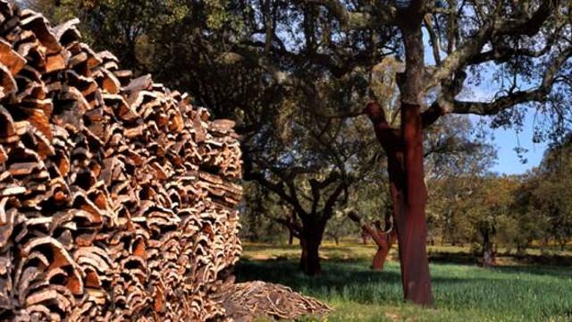 Un tempo i boschi costituivano una grande risorsa per l'economia locale insieme alla lavorazione del sughero che coinvolgeva buona parte della popolazione di Niscemi