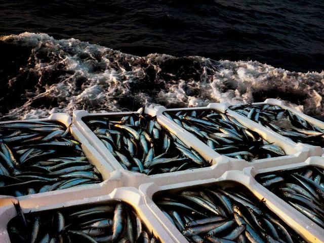 Il pescato fresco dell'equipaggio Testa