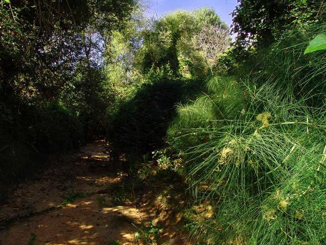 Un tratto di vegetazione del Vallone di Piano di Corte