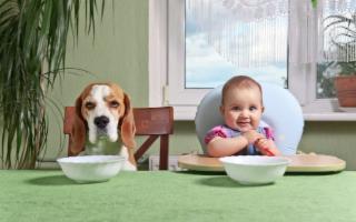 Animali domestici come figli: la Pet Economy sempre più vicina al Baby Care