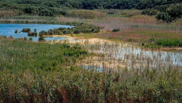 Riserva naturale del Lago Preola e dei Gorghi Tondi - ph Carlo Columba
