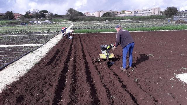 Coltivazioni in corso negli orti sociali della Cooperativa Proxima di Ragusa