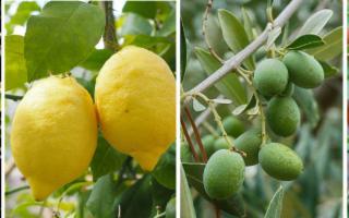 A Siracusa, stati generali su arancio, limone, olivo, pomodoro
