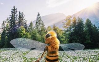 Vi raccontiamo dell'ape ''influencer'' che ha più follower di voi!