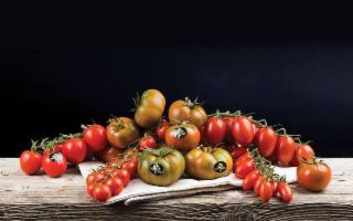 Gli obiettivi per il 2020 del Consorzio pomodoro di Pachino IGP