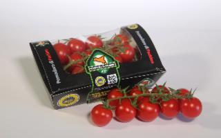 Il Consorzio di Tutela del Pomodorini di Pachino IGP a Macfrut Digital