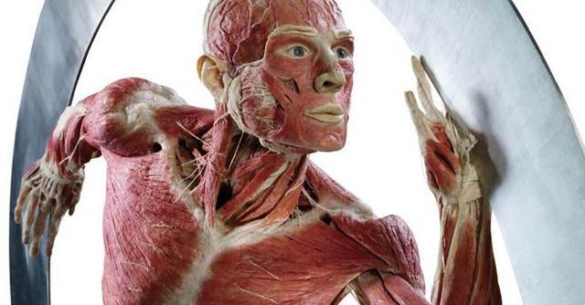 -body-worlds-vital-di-gunther-von-hagens-sospesa
