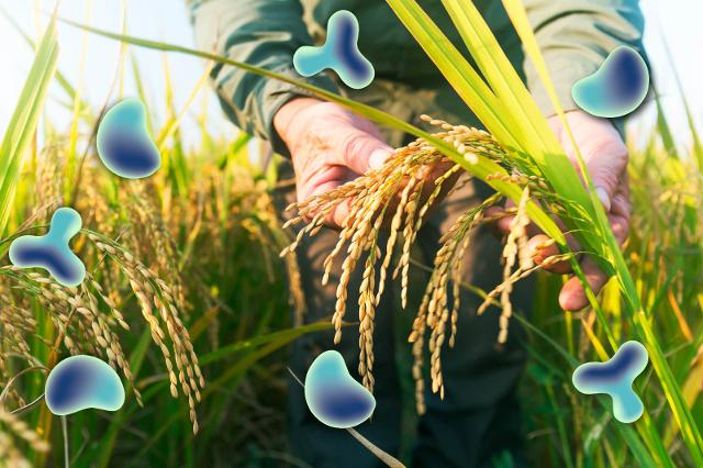 Obiettivo 2 - Porre fine alla fame, raggiungere la sicurezza alimentare, migliorare la nutrizione e promuovere un'agricoltura sostenibile.