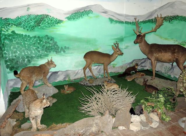 M.A.M. - Museo Ambientalistico Madonita
