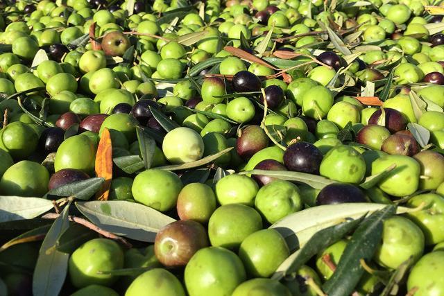 Olive siciliane
