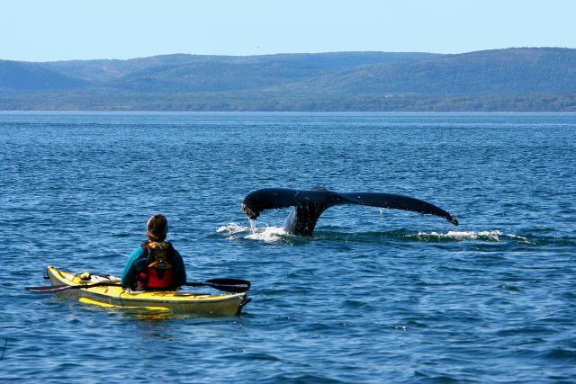 Per i ragazzi amanti dell'avventura una meta può essere il Canada dove ci si può avvicinare alle balene con escursioni in kayak...