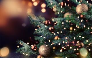 La bellezza di un Albero di Natale vero: una scelta ecologica e di responsabilità