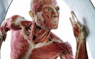 ''Body Worlds Vital'', di Gunther von Hagens