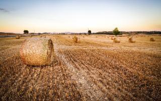 Bandi GAL Terra Barocca per il sostegno alle imprese private (anche startup)