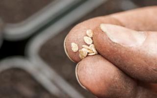 In Sicilia prima condanna per coltivazione di pomodori coperti da brevetto
