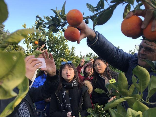 Giornalisti cinesi in visita negli aranceti della Piana di Catania