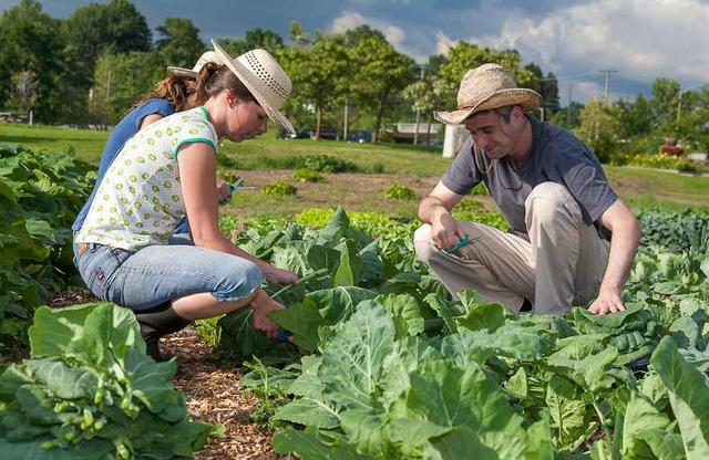 Secondo un'indagine Coldiretti/Ixè, oltre otto italiani su dieci (82%) sarebbero contenti se il proprio figlio lavorasse in agricoltura...